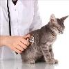 Ветеринарные клиники в Покровке